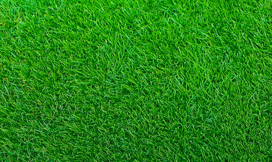 The Grass Patchemerald Zoysia The Grass Patch