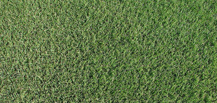 The Grass Patchzeon Zoysia The Grass Patch